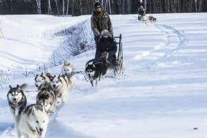 product-launch-marketing-event-dog-sleds